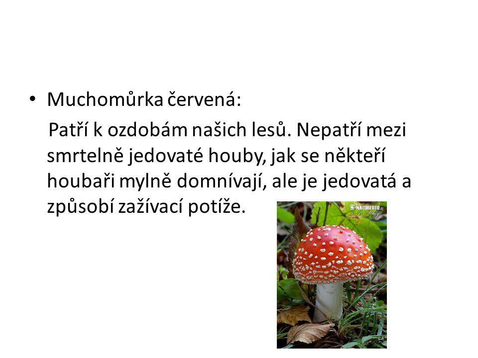 • Muchomůrka červená: Patří k ozdobám našich lesů. Nepatří mezi smrtelně jedovaté houby, jak se někteří houbaři mylně domnívají, ale je jedovatá a způ