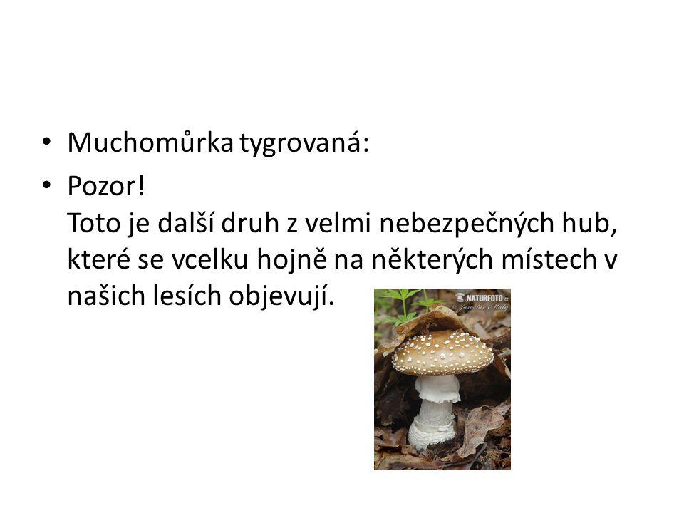 • Muchomůrka tygrovaná: • Pozor! Toto je další druh z velmi nebezpečných hub, které se vcelku hojně na některých místech v našich lesích objevují.