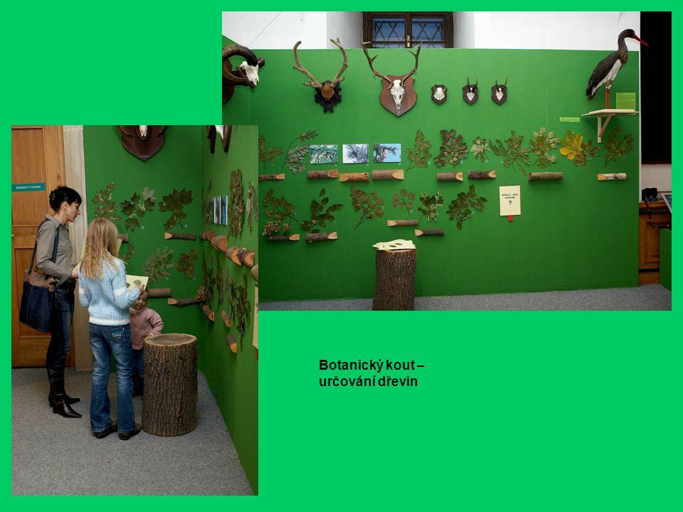 Botanický kout – určování dřevin