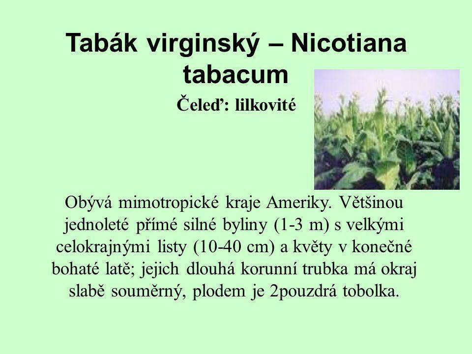Tabák virginský – Nicotiana tabacum Obývá mimotropické kraje Ameriky. Většinou jednoleté přímé silné byliny (1-3 m) s velkými celokrajnými listy (10-4