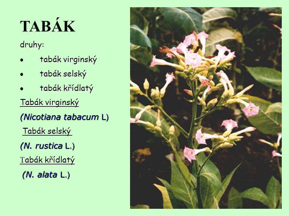 TABÁKdruhy:  tabák virginský  tabák selský  tabák křídlatý Tabák virginský (Nicotiana tabacum L) Tabák selský Tabák selský (N. rustica L.) T abák k