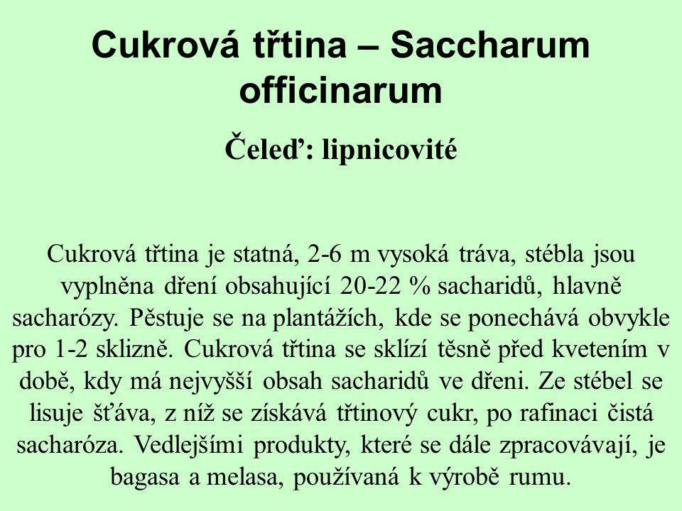 Cukrová třtina – Saccharum officinarum Čeleď: lipnicovité Cukrová třtina je statná, 2-6 m vysoká tráva, stébla jsou vyplněna dření obsahující 20-22 %