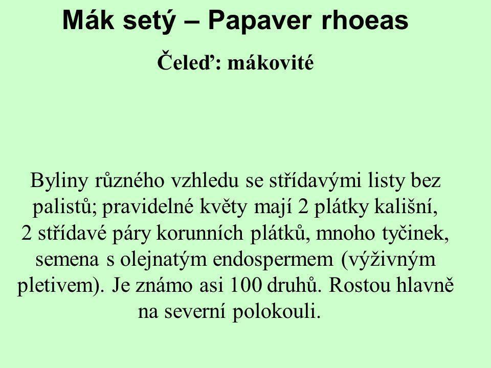 Mák setý – Papaver rhoeas Čeleď: mákovité Byliny různého vzhledu se střídavými listy bez palistů; pravidelné květy mají 2 plátky kališní, 2 střídavé p