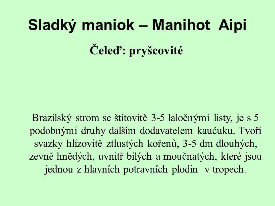 Sladký maniok – Manihot Aipi Čeleď: pryšcovité Brazilský strom se štítovitě 3-5 laločnými listy, je s 5 podobnými druhy dalším dodavatelem kaučuku. Tv