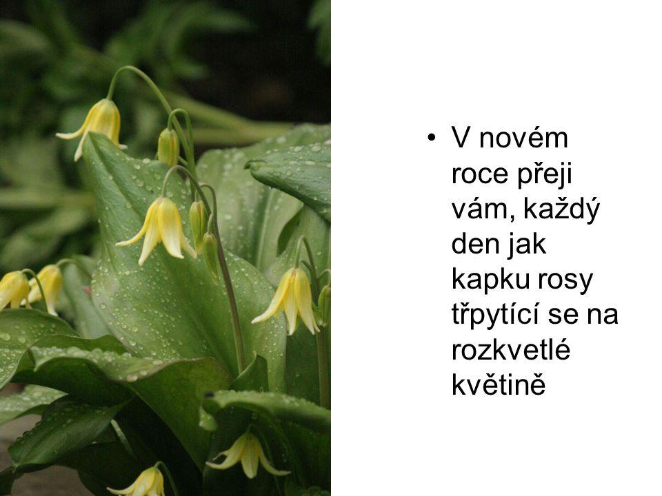 •V novém roce přeji vám, každý den jak kapku rosy třpytící se na rozkvetlé květině