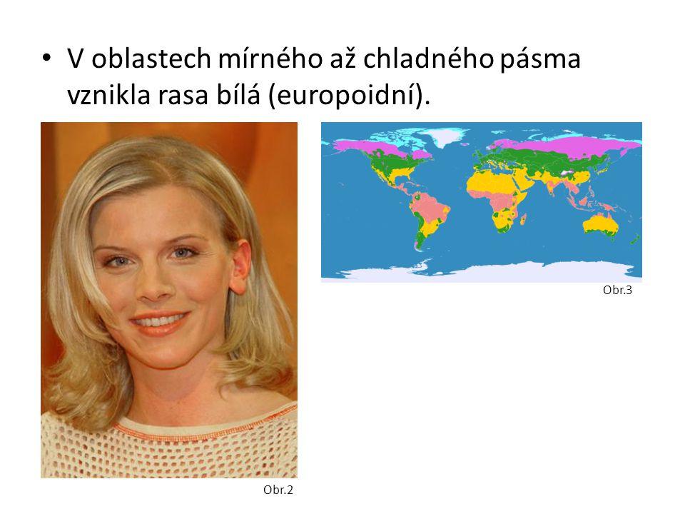 • V oblastech mírného až chladného pásma vznikla rasa bílá (europoidní). Obr.2 Obr.3