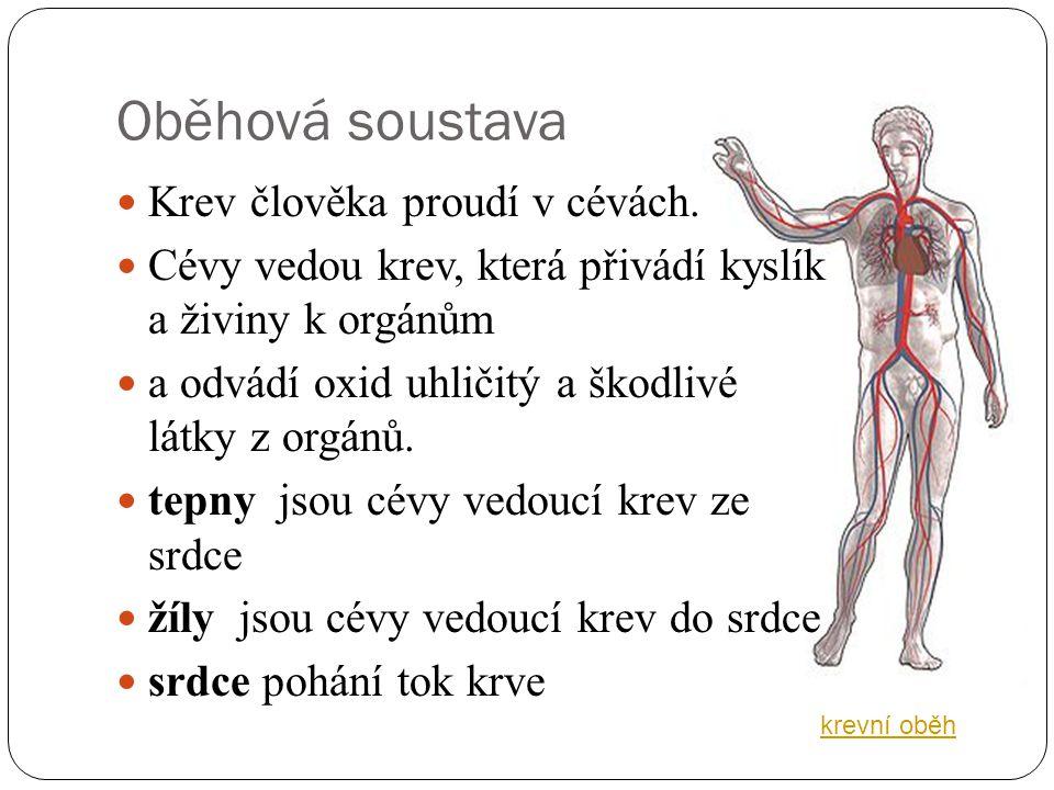 Metodika  Procvičení názvů orgánů oběhové soustavy člověka pomocí pracovního listu.  Seznámení s funkcemi orgánů oběhové soustavy člověka.  Žáci do