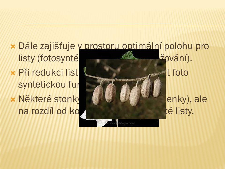 SStonek je obvykle nadzemní orgán cévnatých rostlin, nesoucí zákonitě postavené listy, pupeny a reprodukční orgány. ZZprostředkovává spojení mezi