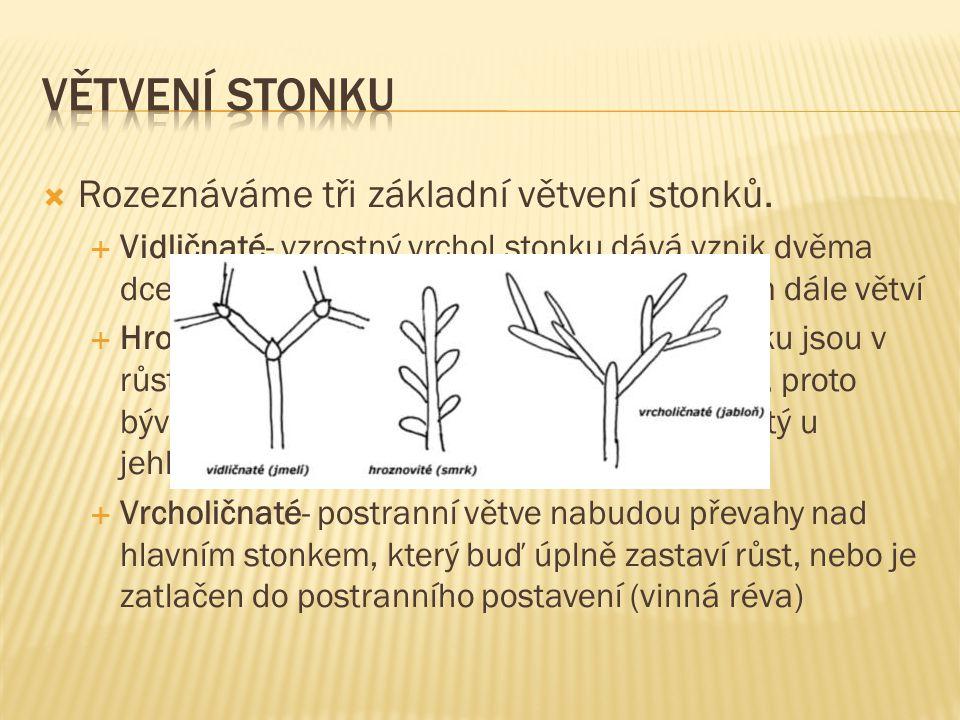  Dřevinné:Kmen- dolní nevětvená část dřevnatého stonku  Keř- jsou celodřevnaté od stonku ovětvené.  Keříky- jsou drobné (nižší než 30cm) keře.  Po