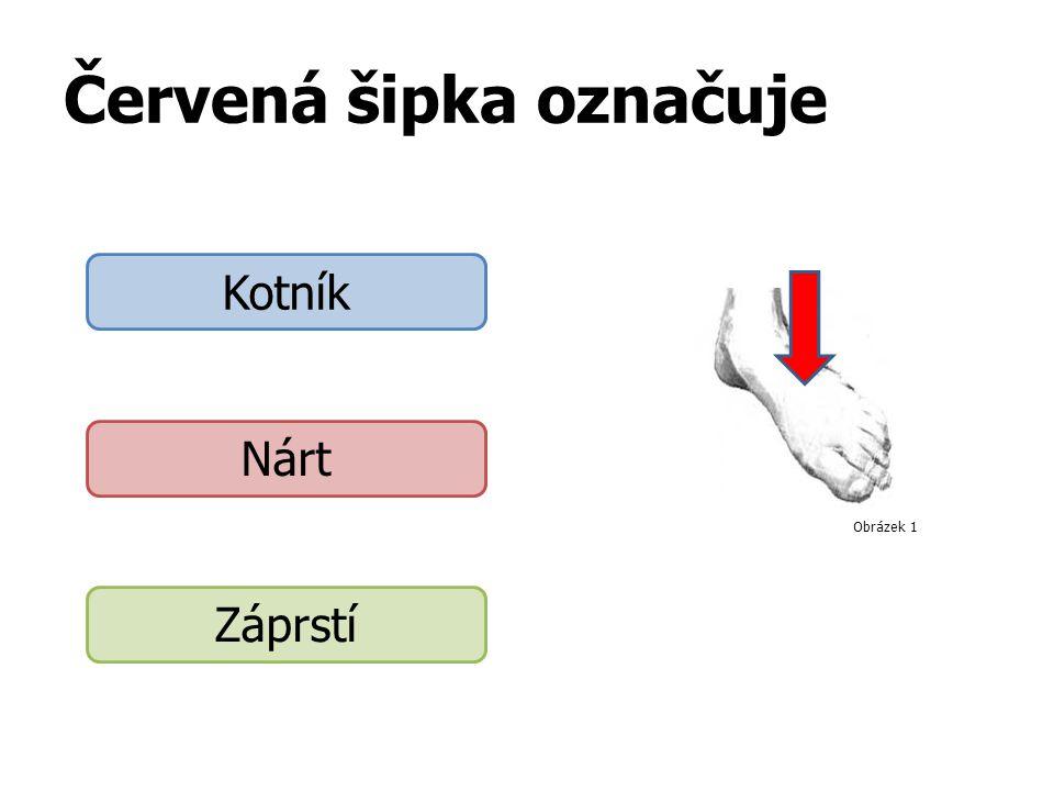 Červená šipka označuje Kotník Nárt Záprstí Obrázek 1