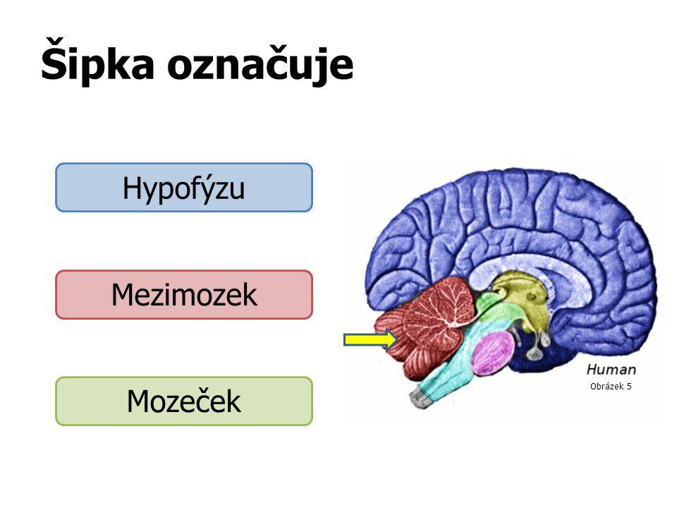 Šipka označuje Hypofýzu Mezimozek Mozeček Obrázek 5