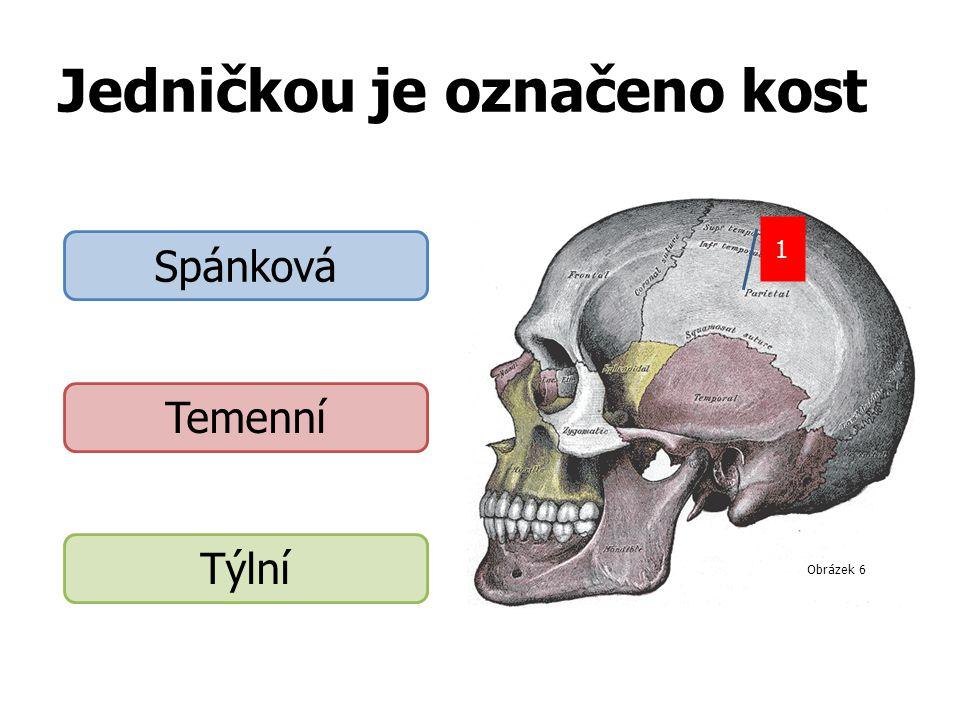 Jedničkou je označeno kost 1 Spánková Temenní Týlní Obrázek 6