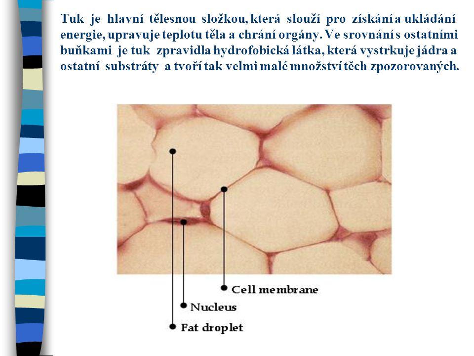 Tuk je hlavní tělesnou složkou, která slouží pro získání a ukládání energie, upravuje teplotu těla a chrání orgány. Ve srovnání s ostatními buňkami je