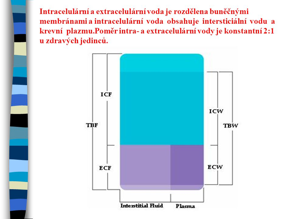 Intracelulární a extracelulární voda je rozdělena buněčnými membránami a intracelulární voda obsahuje intersticiální vodu a krevní plazmu.Poměr intra-