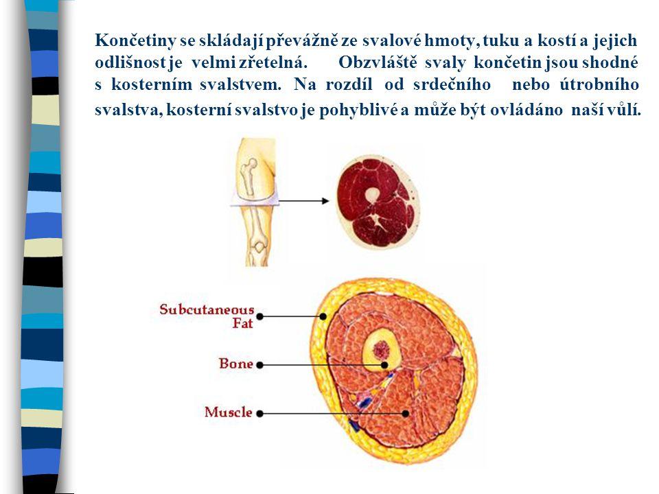 Končetiny se skládají převážně ze svalové hmoty, tuku a kostí a jejich odlišnost je velmi zřetelná. Obzvláště svaly končetin jsou shodné s kosterním s