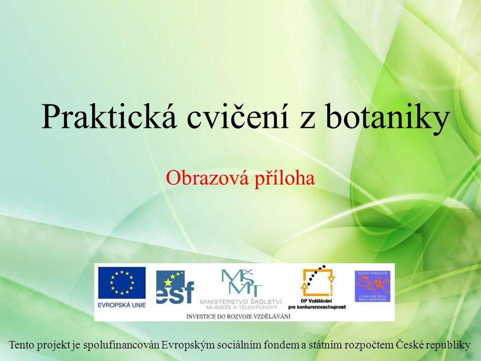 Praktická cvičení z botaniky Tento projekt je spolufinancován Evropským sociálním fondem a státním rozpočtem České republiky Obrazová příloha