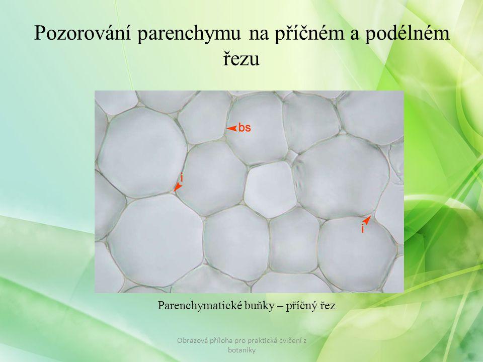 Pozorování parenchymu na příčném a podélném řezu Obrazová příloha pro praktická cvičení z botaniky Parenchymatické buňky – příčný řez