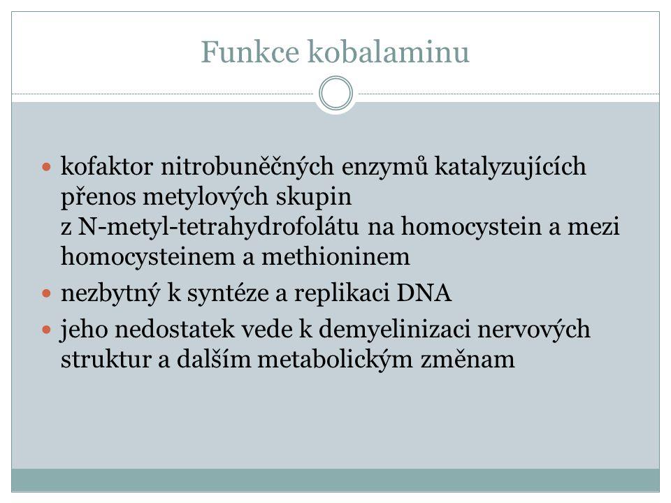 Megaloblastové anémie z nedostatku vitaminu B12 I.