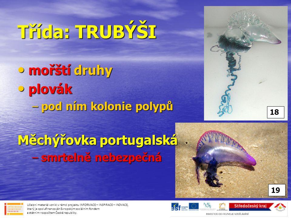 Třída: TRUBÝŠI • mořští druhy • plovák –pod ním kolonie polypů Měchýřovka portugalská –smrtelně nebezpečná Učební materiál vznikl v rámci projektu INF