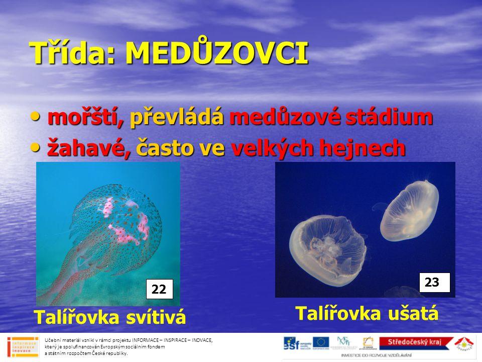Třída: MEDŮZOVCI • mořští, převládá medůzové stádium • žahavé, často ve velkých hejnech Talířovka ušatá Talířovka svítivá 23 22 Učební materiál vznikl