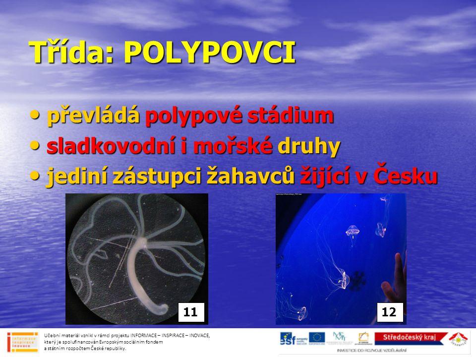 Třída: POLYPOVCI • převládá polypové stádium • sladkovodní i mořské druhy • jediní zástupci žahavců žijící v Česku Učební materiál vznikl v rámci proj