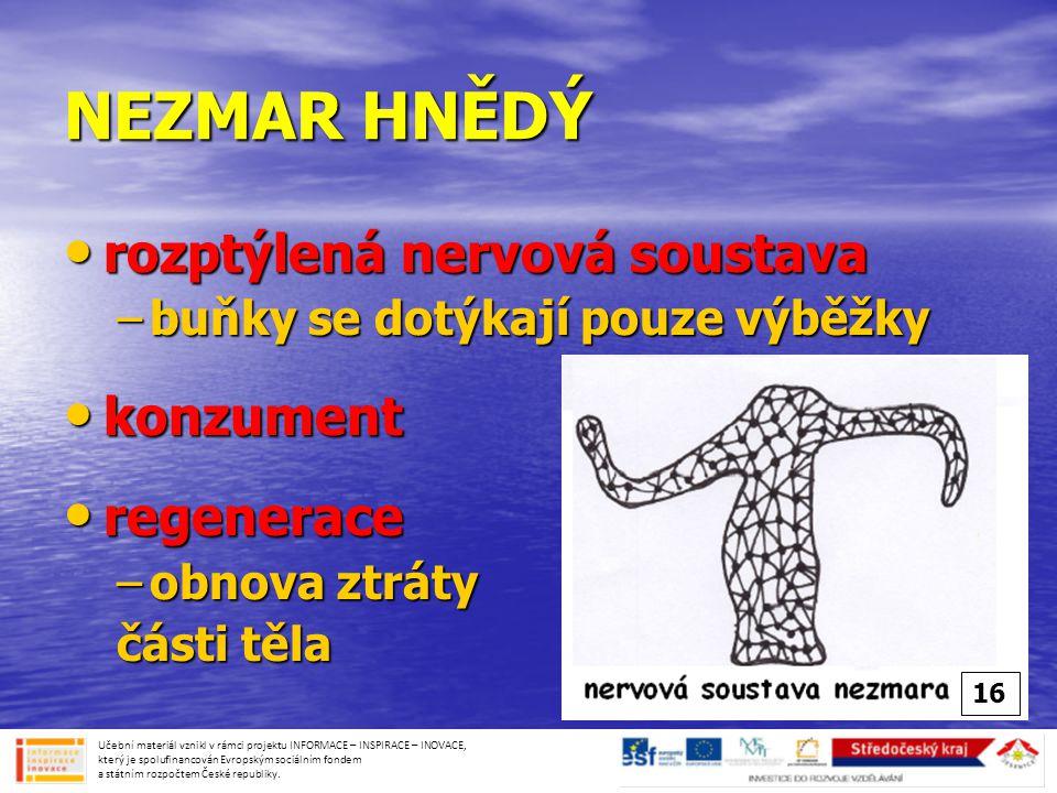 NEZMAR HNĚDÝ • rozptýlená nervová soustava –buňky se dotýkají pouze výběžky • konzument • regenerace –obnova ztráty části těla Učební materiál vznikl