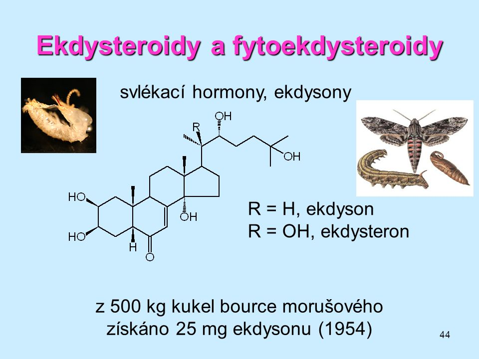 44 Ekdysteroidy a fytoekdysteroidy svlékací hormony, ekdysony R = H, ekdyson R = OH, ekdysteron z 500 kg kukel bource morušového získáno 25 mg ekdyson
