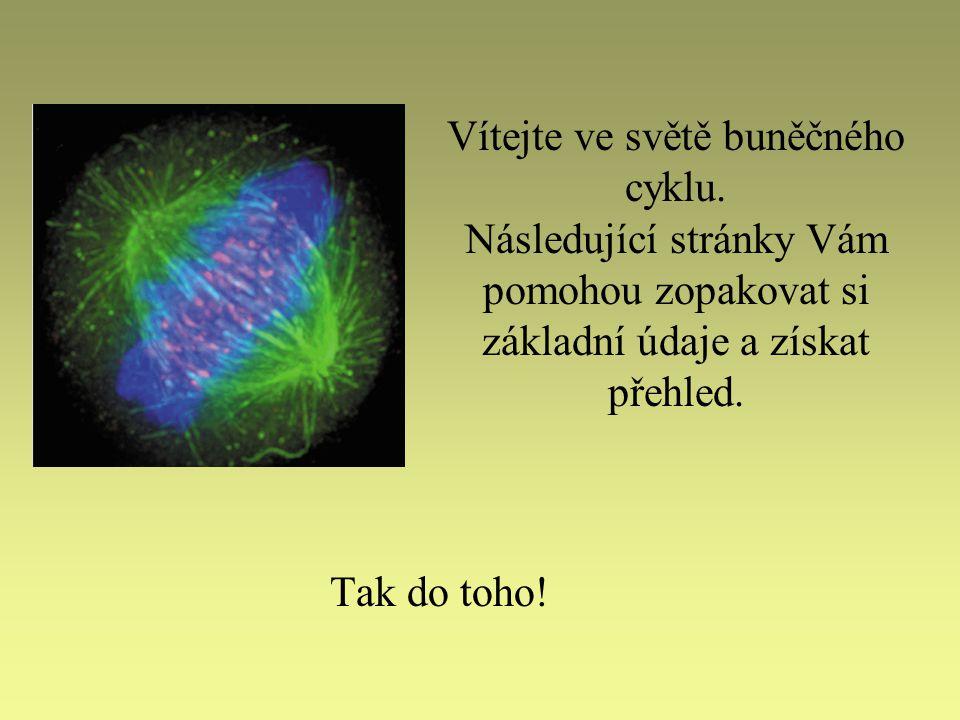 Vítejte ve světě buněčného cyklu.