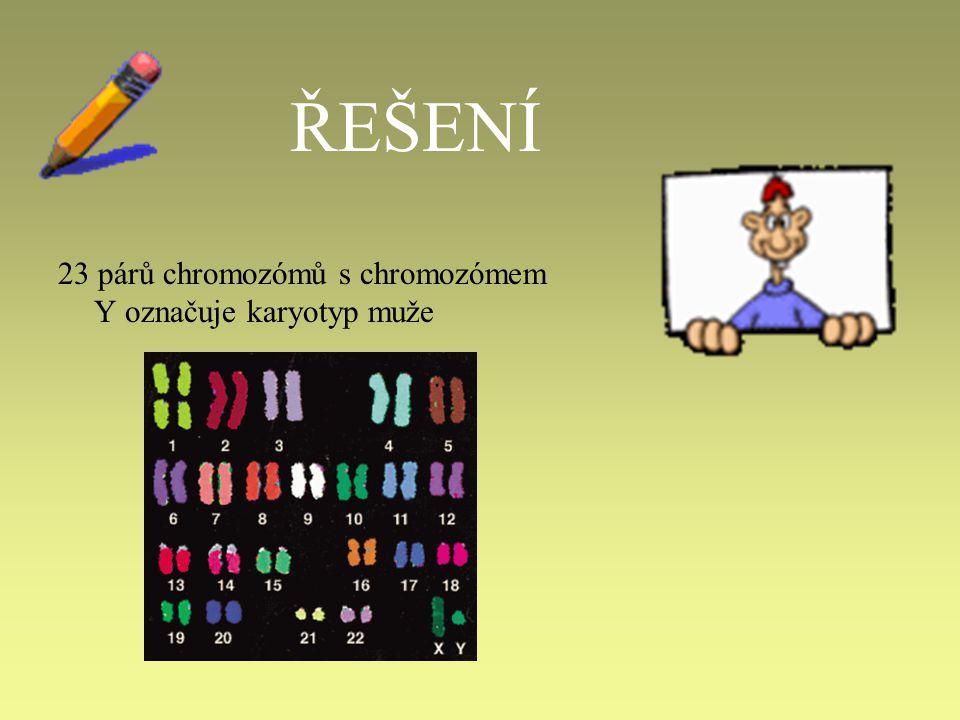 ŘEŠENÍ 23 párů chromozómů s chromozómem Y označuje karyotyp muže