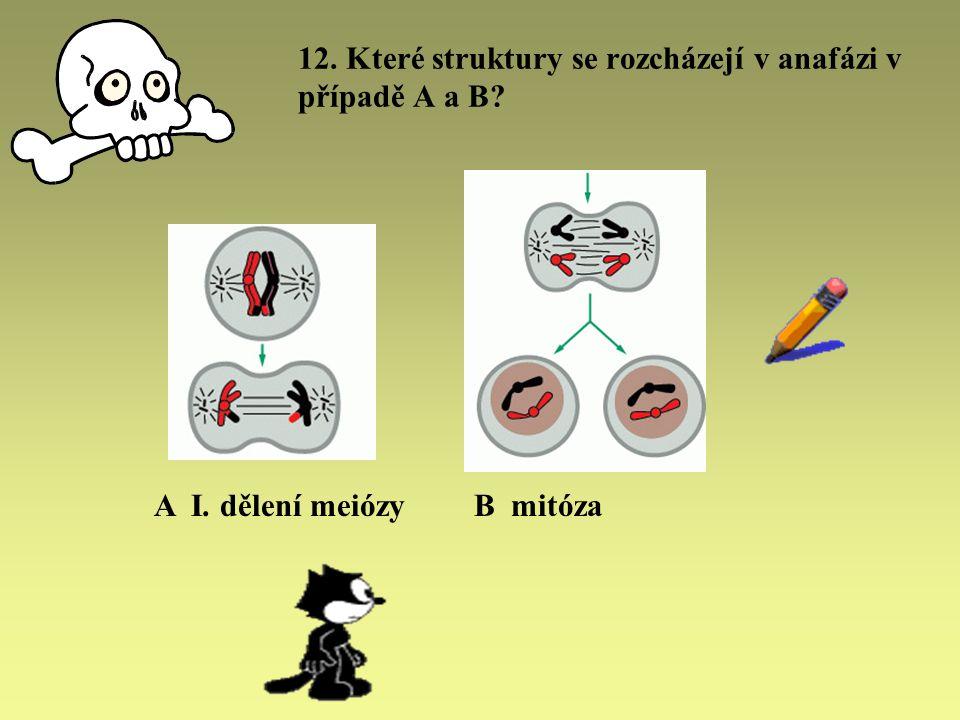 12. Které struktury se rozcházejí v anafázi v případě A a B? A I. dělení meiózyB mitóza