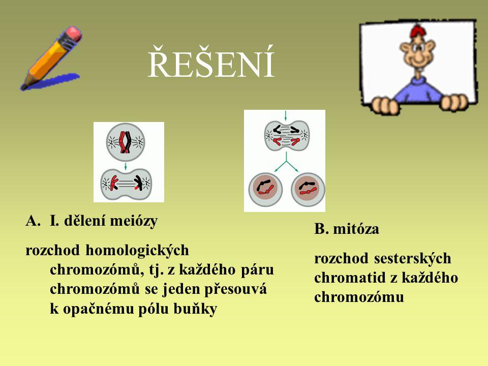 ŘEŠENÍ A.I.dělení meiózy rozchod homologických chromozómů, tj.
