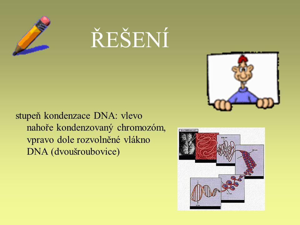 7.Na obrázku je zachycena buňka v průběhu mitózy.