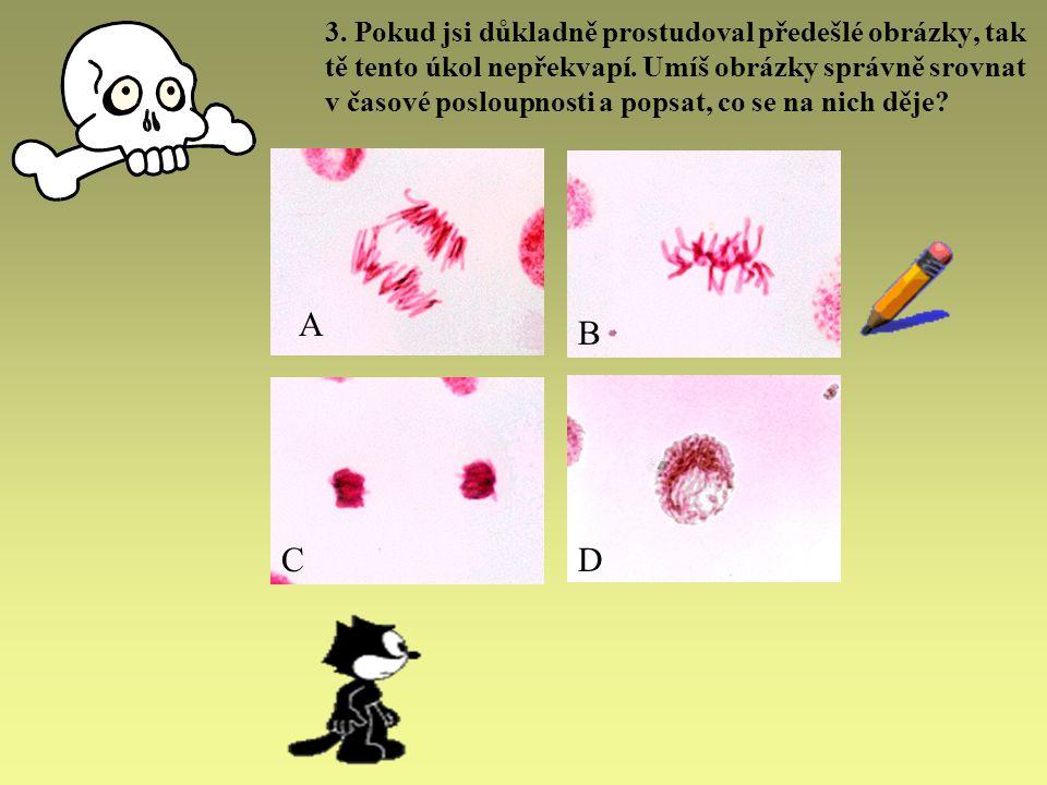 ŘEŠENÍ Výsledkem mitózy jsou 2 diploidní buňky (mají dvě sady chromozómů).