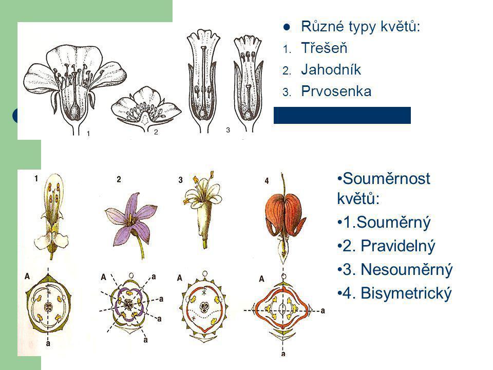  Různé typy květů: 1.Třešeň 2. Jahodník 3. Prvosenka •Souměrnost květů: •1.Souměrný •2.