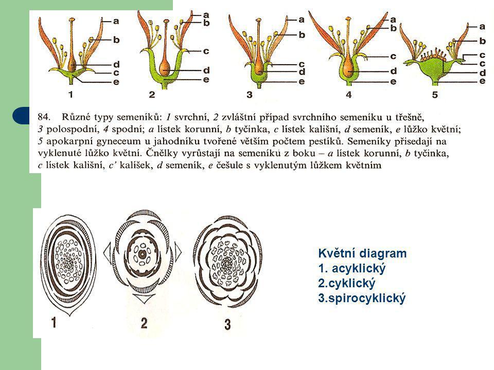 Různé typy semeníků Květní diagram 1. acyklický 2.cyklický 3.spirocyklický