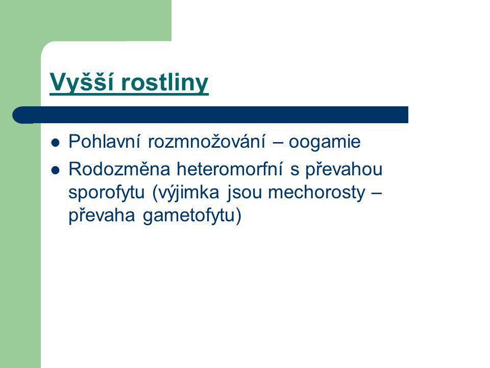 Vyšší rostliny PPohlavní rozmnožování – oogamie RRodozměna heteromorfní s převahou sporofytu (výjimka jsou mechorosty – převaha gametofytu)