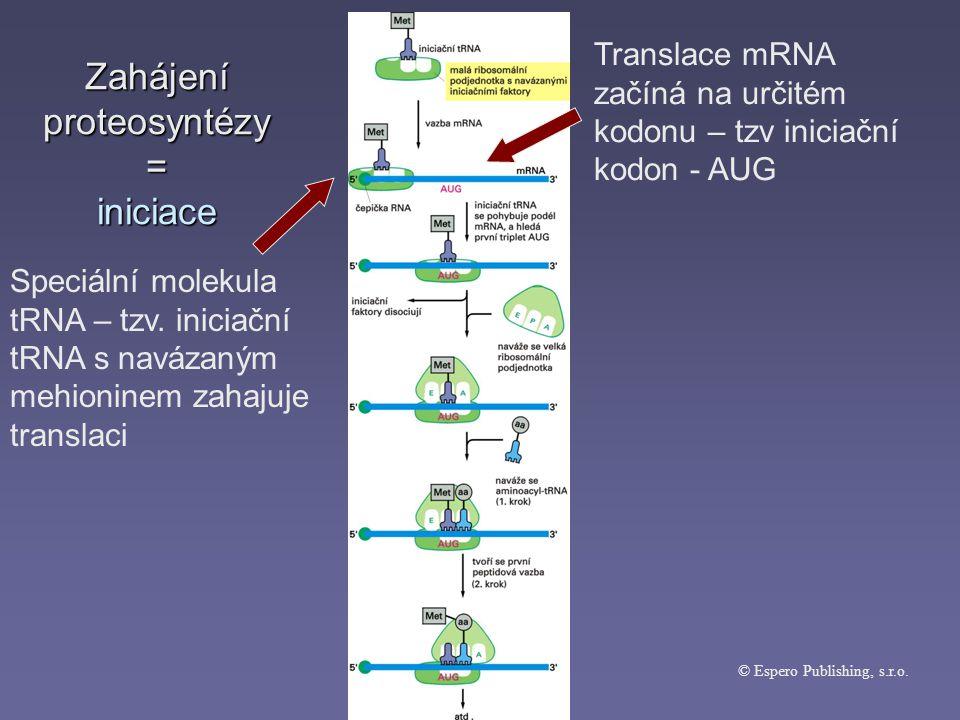 Zahájení proteosyntézy = iniciace © Espero Publishing, s.r.o.