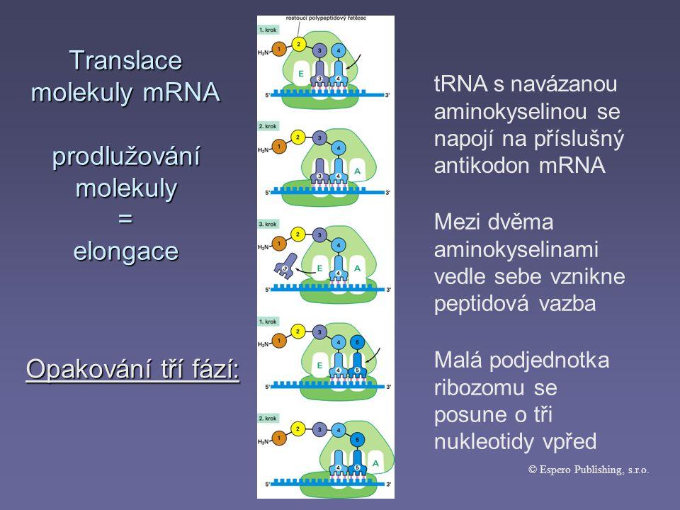Translace molekuly mRNA prodlužování molekuly = elongace © Espero Publishing, s.r.o.