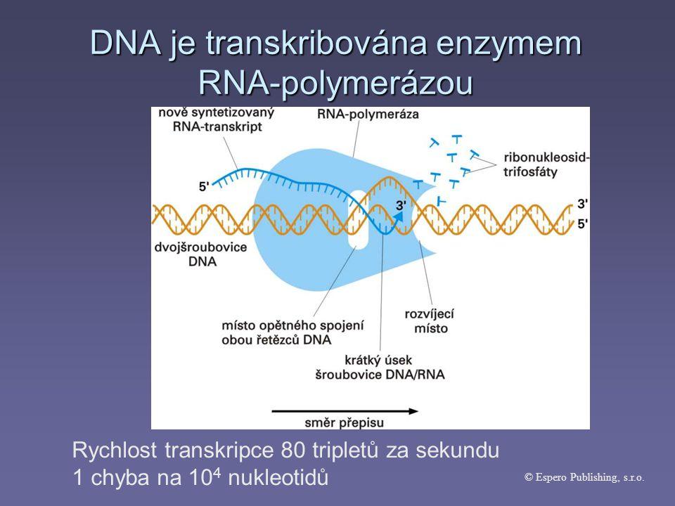 Poté co vznikne molekula mRNA, dochází k její úpravě – tzv.