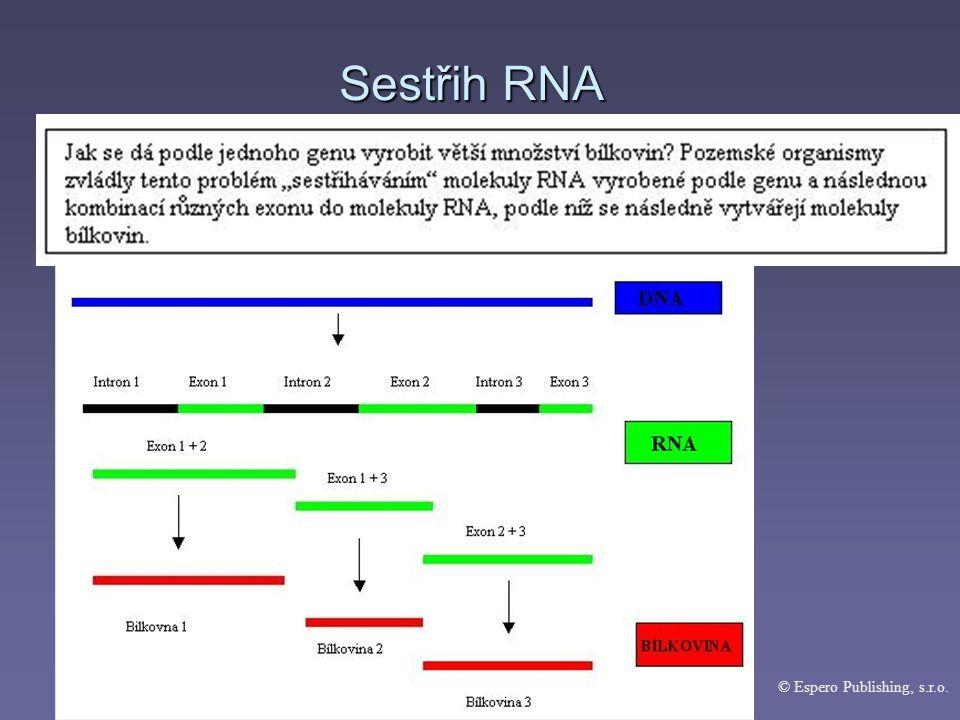 Konečná fáze proteosyntézy = terminace © Espero Publishing, s.r.o.