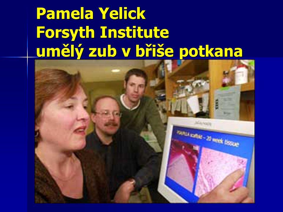 Pamela Yelick Forsyth Institute umělý zub v břiše potkana