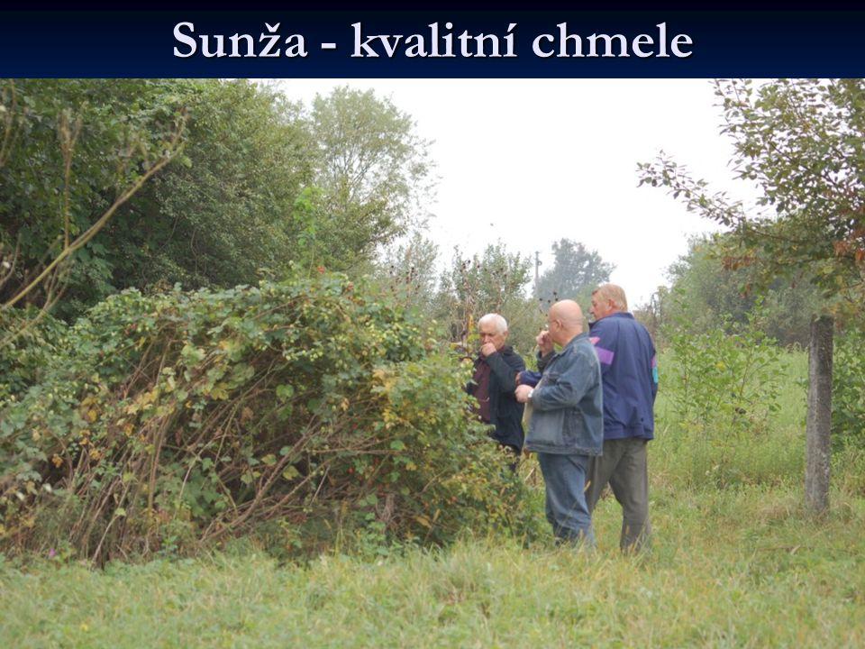 Sunža - kvalitní chmele