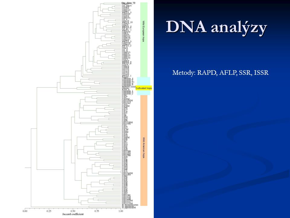 DNA analýzy Metody: RAPD, AFLP, SSR, ISSR