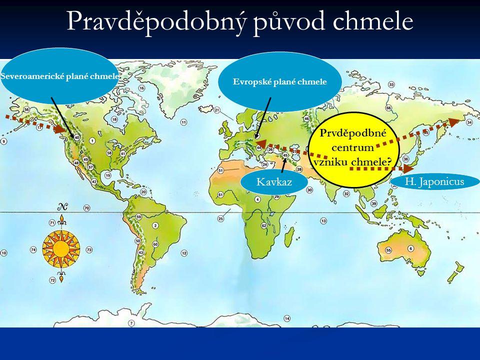 Severoamerické plané chmele Evropské plané chmele H. Japonicus Kavkaz Prvděpodbné centrum vzniku chmele? Pravděpodobný původ chmele