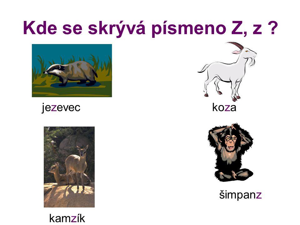 Kde se skrývá písmeno Z, z ? jezeveckoza kamzík šimpanz