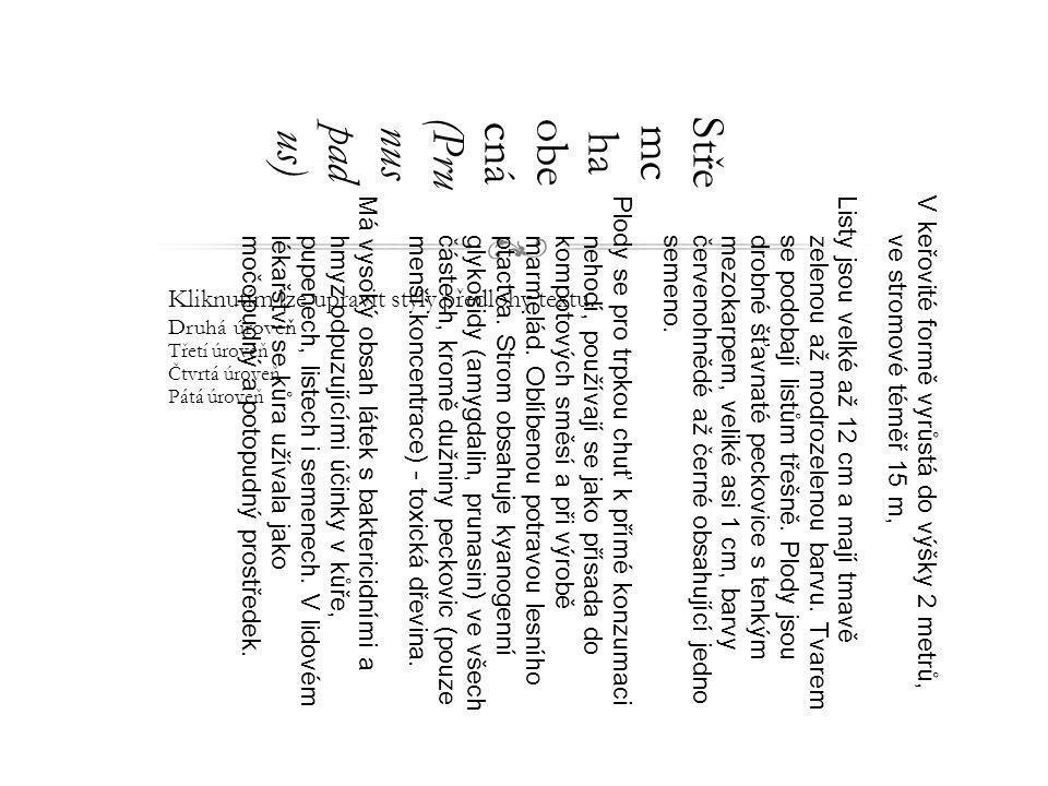 Kliknutím lze upravit styly předlohy textu. Druhá úroveň Třetí úroveň Čtvrtá úroveň Pátá úroveň Stře mc ha obe cná (Pru nus pad us) V keřovité formě v