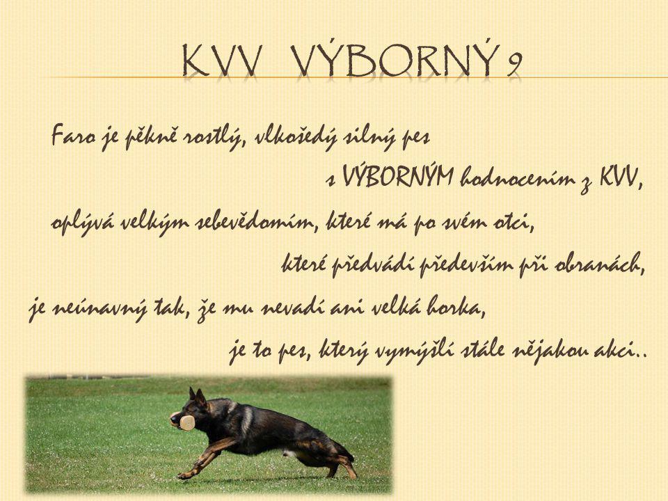 Faro je pěkně rostlý, vlkošedý silný pes s VÝBORNÝM hodnocením z KVV, oplývá velkým sebevědomím, které má po svém otci, které předvádí především při obranách, je neúnavný tak, že mu nevadí ani velká horka, je to pes, který vymýšlí stále nějakou akci..