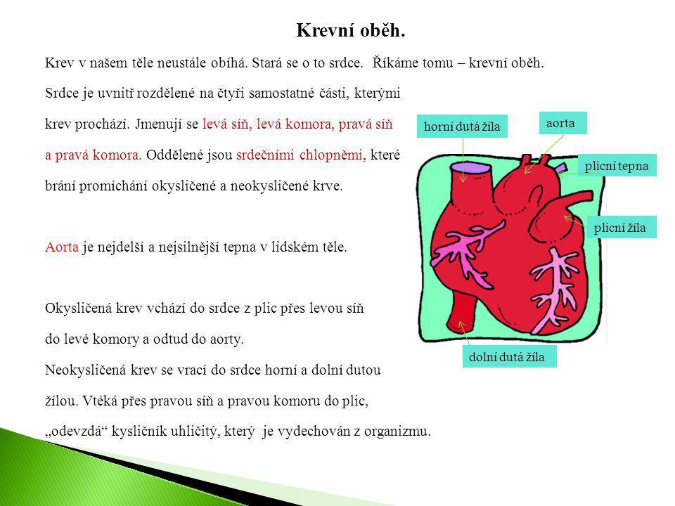 Krevní oběh. Krev v našem těle neustále obíhá. Stará se o to srdce. Říkáme tomu – krevní oběh. Srdce je uvnitř rozdělené na čtyři samostatné části, kt