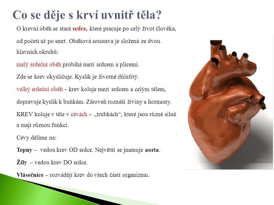 O krevní oběh se stará srdce, které pracuje po celý život člověka, od početí až po smrt. Oběhová soustava je složená ze dvou hlavních okruhů: malý srd