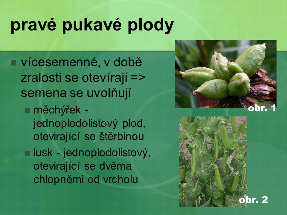 pravé pukavé plody  vícesemenné, v době zralosti se otevírají => semena se uvolňují  měchýřek - jednoplodolistový plod, otevirající se štěrbinou  lusk - jednoplodolistový, otevirající se dvěma chlopněmi od vrcholu obr.